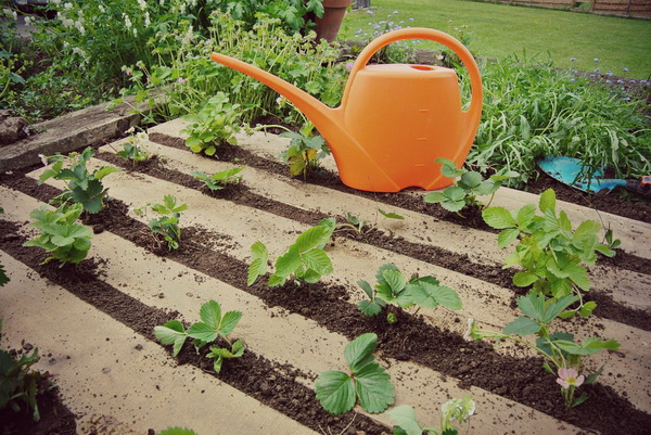Как посадить клубнику из семян в домашних условиях