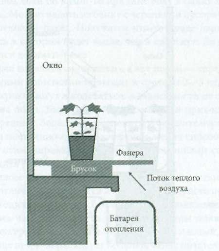 Как посадить виноград черенками дома
