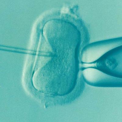 как высчитать день овуляции для зачатия