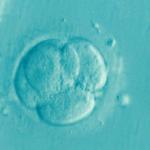 Признаки имплантации эмбриона в матку: когда происходит, на какой день?